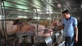 Yêu cầu giải pháp căn cơ ổn định ngành chăn nuôi