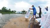 4 điều kiện về nuôi, chế biến và xuất khẩu cá tra
