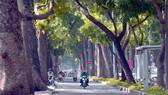 Cây xanh trên đường Tôn Đức Thắng