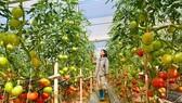 Cấp bách tổ chức lại sản xuất nông nghiệp