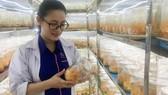 Đưa dược liệu quý về Việt Nam