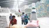 Xuất khẩu gạo: Giảm lượng, tăng chất