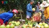 Bưởi da xanh là một trong các loại trái cây trồng được ở các tỉnh Tiền Giang- Bến Tre- Trà Vinh- Vĩnh Long, cần sự liên kết trong khâu trồng, chế biến xuất khẩu