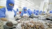 Châu Âu 'rút thẻ vàng' với hải sản Việt Nam