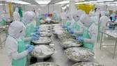 Chế biến thủy sản xuất khẩu tại Công ty thủy sản Trung Sơn. (Ảnh: Bùi Như Trường Giang/TTXVN)