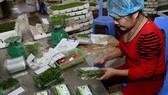 Xuất khẩu rau quả ước đạt 321 triệu USD trong tháng 1