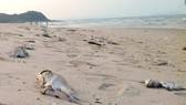 Sự cố môi trường biển đã tác động mạnh mẽ đến hoạt động du lịch
