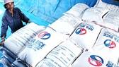 Gạo Việt Nam xuất khẩu nhiều ra nước ngoài