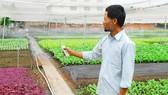 Ông Vũ Bình An (xã Xuân Thới Đông, huyện Hóc Môn) ứng dụng hệ thống tưới tiêu tự động kết hợp điều khiển từ xa tại vườn rau VietGAP của gia đình Ảnh:  LINH CHI
