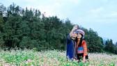 Độc đáo Lễ hội hoa Tam giác mạch Sun World Fansipan Legend 2017