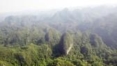 Khu vực bách xanh thuần chủng sống trên núi đá ở Phong Nha - Kẻ Bàng