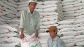 Sugar inventory hits record high