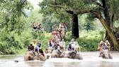 Cưỡi voi ở Kanchanaburi