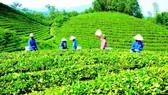 Một dự án được ngân hàng cho vay theo chương trình nông nghiệp sạch. Ảnh: Hà Phương