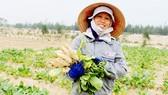 Chị Lê Thị Minh ở xã Thạch Văn (huyện Thạch Hà, Hà Tĩnh) cho biết, trồng rau củ quả trên đất cát ven biển đã mang lại nguồn thu nhập cao cho người dân