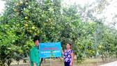 Ông Nguyễn Công Phụ và vợ bên vườn cam VietGAP mang lại hiệu quả kinh tế cao
