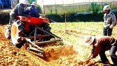 Nhập khẩu khoai tây Pháp không ảnh hưởng xấu tới sản xuất và thị trường trong nước