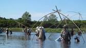 Người dân dùng vó bắt cá