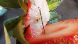 Kim may trong dâu tây do người dùng phát hiện ở Gladstone, Queensland, Australia. Ảnh: FACEBOOK/ANGELA SENENSON