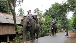 Tài trợ 65.000USD để dừng cưỡi voi tại Đắk Lắk