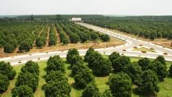 Trang trại trồng gần 120ha mít của Vinamit ở huyện Phú Giáo, tỉnh Bình Dương