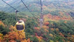 Núi Palgongsan, ở thành phố Daegu. Ảnh: KTO