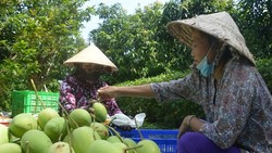 Xoài Việt Nam đủ tiêu chuẩn sang Mỹ