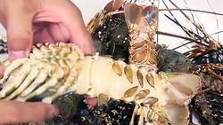 Tôm hùm lớn 0,5 - 0,6kg bị bệnh đen mang.     Ảnh: MINH CHÂU