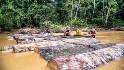Con đường rửa gỗ lậu
