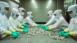 Chế biến tôm đông lạnh xuất khẩu tại Công ty Minh Phú.