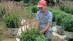 Trồng hoa kiểng trong chậu phù hợp với nông nghiệp đô thị
