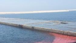 Vệt nước màu đỏ tại biển Vũng Áng là do sự bùng phát của tảo