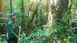 Ông Trần Văn Ba bám trụ giữ rừng Cà Nhông