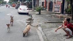 Chó thả rong trên đường Chu Văn An (Bình Thạnh)
