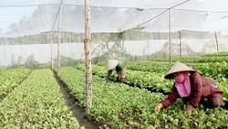 Sản xuất rau hữu cơ theo tiêu chuẩn châu Âu và Mỹ ở trang trại Organica tại huyện Long Thành, Đồng Nai