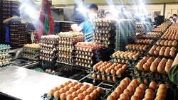 Dây chuyền sản xuất tại Công ty CP Thực phẩm Vĩnh Thành Đạt