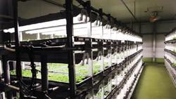 Xưởng cây trồng ở Nhật Bản