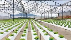Tăng ứng dụng Nano trong nông nghiệp