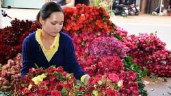 Giá hoa Đà Lạt tăng hơn gấp đôi trước lễ 20-11