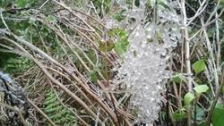 Fansipan sắp có băng giá, miền Trung có nơi mưa 500mm