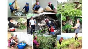 Tình trạng tái nghèo đang diễn ra ở nhiều địa phương