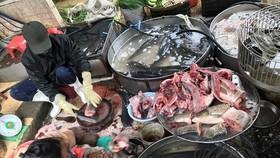 Fish sold at Hanoi's Dong Xuan Market. (Source: VNA)