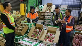Vietnamese dragon fruits have been exported to Australia. (Source: VNA)