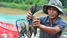Dong Nai invests VND226 bln for hi-tech aquatic breeding area