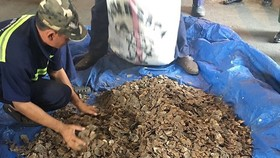 Additional 3.3 tons of pangolin scales smuggled into Vietnam