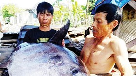 Fisherman catches giant fish listed in red book