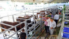 Modern farming co-operatives are needed to achieve a breakthrough in restructuring agriculture in HCM City and raising the incomes of farmers. (Photo: VNA)