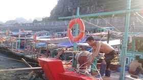 A fisherman in Quang Ninh anchors his boat (Photo: SGGP)