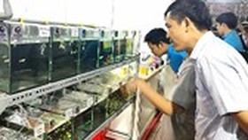Third ornamental fish festival opens in Phu Tho stadium Center