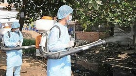 Peak season of dengue appears in Mekong delta